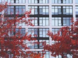 das Fenster eines Gebäudes mit einem schönen roten Ahornblatt davor. foto