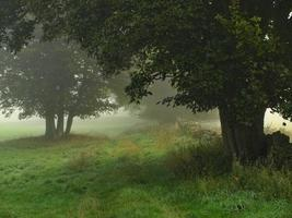 großer Baum im Morgenwald mit weißem Nebel foto