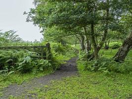 Trail bei Skipwith Common, North Yorkshire, England foto