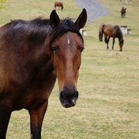 schönes schwarzes Pferdeportrait foto