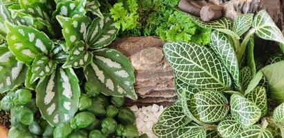 grüner Naturpflanzengarten mit Stein im kleinen Wasserfalltopfhintergrund foto