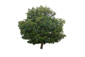 grüner Baum isoliert auf weißem Hintergrund foto