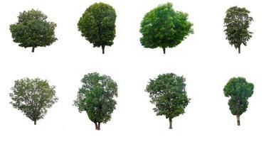 Sammlung von Bäumen auf weißem Hintergrund foto
