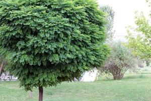 verschiedene bunte Bäume im Wald und alle Grüntöne foto