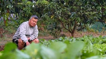 ein älterer Bauer schaut stolz in die Kamera im Gemüsefeld. foto