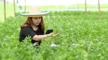 Ein Teenager-Bauer, der ein Tablet verwendet, kümmert sich und kontrolliert Gemüse in einem Gewächshaus. foto