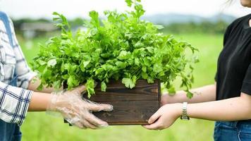Bauern liefern Gemüse in Holzkisten an Kunden. foto