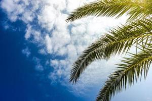 Palmenblätter als natürlicher Hintergrund foto