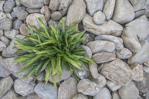 grüne Pflanze, die inmitten von Felsen wächst foto