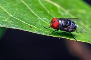Nahaufnahme von Fliegen auf einem Blatt foto