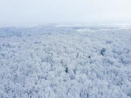 Draufsicht auf den verschneiten Wald mit weißen Zweigen foto