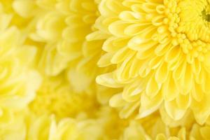 Nahaufnahme Blütenfarbe der schönen Blume foto