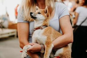 Frau hält einen Akita-Welpen in ihren Armen. Gehen Sie an einem Sommertag mit Ihrem Haustier spazieren foto