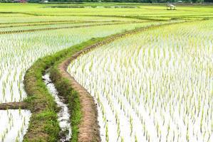 Terrasse Reisfelder im Bezirk Mae Chaem Chiang Mai, thailand foto