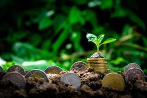 Baum wächst aus Münzen mit Kopierraum foto