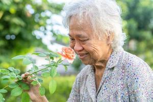 asiatische senior oder ältere alte dame frau mit rosa orange rose blume im sonnigen garten. foto