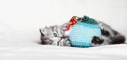 silbernes Kätzchen auf dem Schnee, das mit dem Weihnachtsmannball spielt foto
