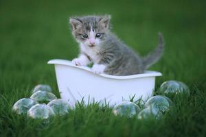 Neugeborenes Kätzchenporträt im Freien auf der grünen Wiese foto