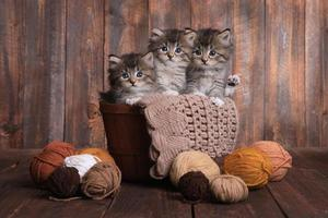 Kätzchen mit Wollknäueln im Studio foto