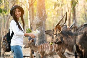Frau, die Tiere im Zoo beobachtet und füttert foto