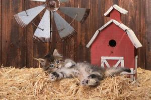 süßes Kätzchen in einer Scheunenumgebung mit Stroh foto