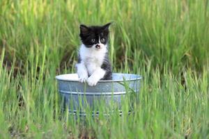 Kätzchen draußen im grünen hohen Gras an einem sonnigen Tag foto