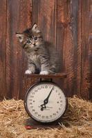 entzückendes Kätzchen auf antiker Vintage-Skala foto