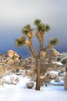 verschneite Landschaft im Joshua Tree Nationalpark foto