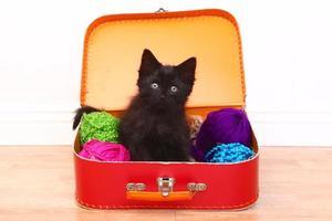 Kätzchen in einem mit Garn gefüllten Koffer foto