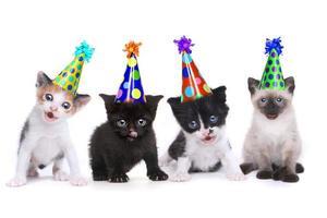 Geburtstagslied singen Kätzchen auf weißem Hintergrund foto