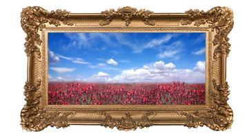 gerahmtes Feld mit hübschen roten Blumen und schönem Himmel foto