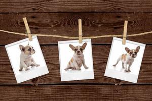 Bilder, die an einem Seil von einem entzückenden Welpen hängen foto