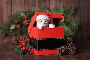 Weihnachtskätzchen auf einer Kiste foto