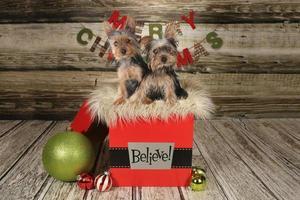Welpen auf einem weihnachtlichen Hintergrund foto