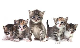 süße neugeborene Kätzchen leicht isoliert auf weiß foto