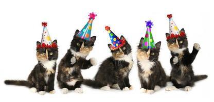 5 Kätzchen auf weißem Hintergrund mit Geburtstagshüten foto