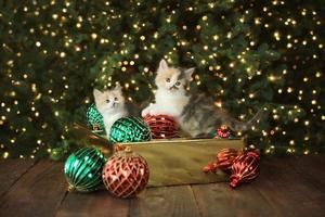 süßes süßes Kätzchen foto