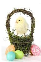 Bild mit Küken und Eiern foto