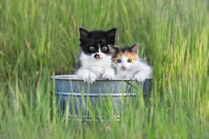 Kätzchen im Freien im hohen grünen Gras foto
