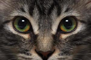 kleines Kätzchen im Katzenbett foto