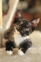 Babykatze sitzt auf Spielturm bei natürlichem Licht foto