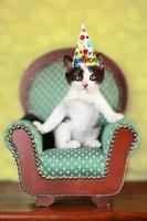Kätzchen sitzt auf einem Stuhl foto
