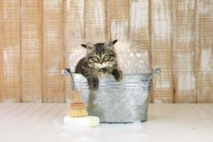 Kätzchen in einer Badewanne mit Blasen foto