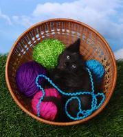 süßes Kätzchen in einem mit Garn gefüllten Etui foto