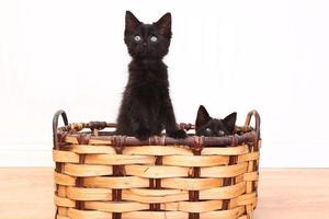 neugierige Kätzchen in einem Korb auf weiß foto