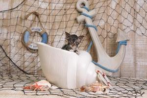 triefend nasses Kätzchen auf Hintergrund mit Ozeanmotiven foto