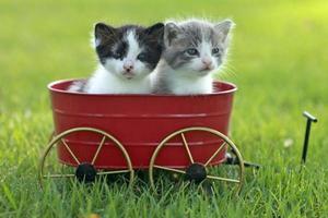 Kätzchen im Freien bei natürlichem Licht foto