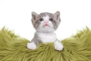 Kätzchenporträt im Studio auf weißem Hintergrund foto