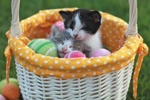entzückende Kätzchen in einem Feiertags-Osterkorb foto