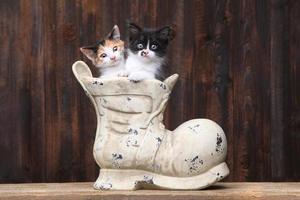 entzückende Kätzchen in einem alten Stiefelschuh auf Holzhintergrund foto
